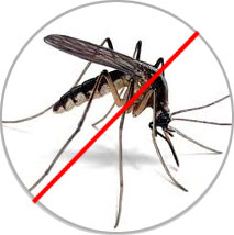 Mosquitoes-Problem-Find-Solution-adiconpest.com